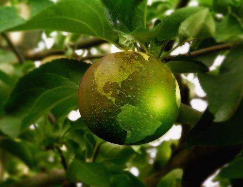 dropshipping e prodotti ecologici