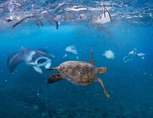 Plastica: il nostro bel mare sarà un ricordo